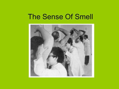 The Sense Of Smell.