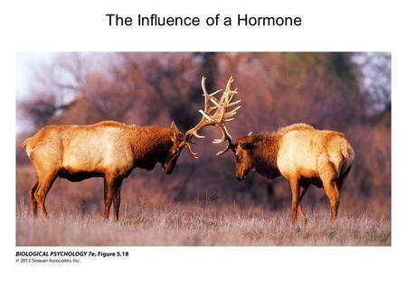 The Influence of a Hormone. Hormones Have Many Actions in the Body Hormones are chemicals, secreted by one cell group, that travel through the bloodstream.