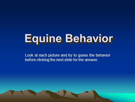 Equine Behavior Look at each picture and try to guess the behavior before clicking the next slide for the answer.