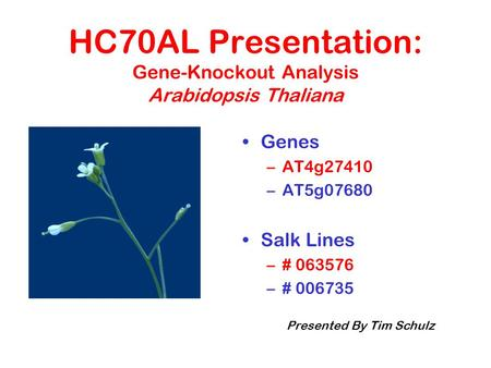 HC70AL Presentation: Gene-Knockout Analysis Arabidopsis Thaliana Genes –AT4g27410 –AT5g07680 Salk Lines –# 063576 –# 006735 Presented By Tim Schulz.