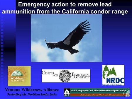 Emergency action to remove lead ammunition from the California condor range Ventana Wilderness Alliance Protecting the Northern Santa Lucia.