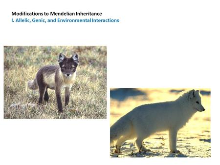 Modifications to Mendelian Inheritance I. Allelic, Genic, and Environmental Interactions.