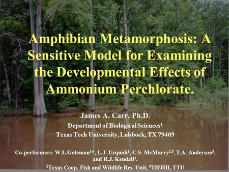 Amphibian Metamorphosis: A Sensitive Model for Examining the Developmental Effects of Ammonium Perchlorate. James A. Carr, Ph.D. Department of Biological.