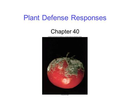 Plant Defense Responses Chapter 40. 2 Physical Defenses Winds can uproot a tree, or snap the main shoot of a small plant -Axillary buds give plants a.