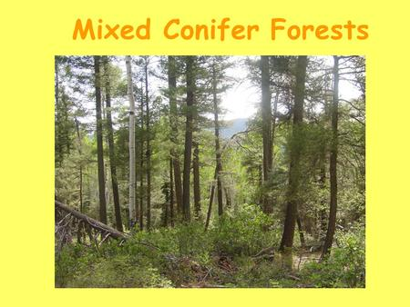 Mixed Conifer Forests. * ~8,000-10,000 ft elevation * 25-30 inches of precipitation/annually * very complex and heterogeneous in structure, composition,