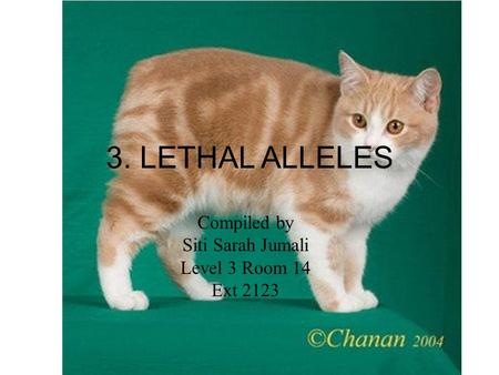 3. LETHAL ALLELES Compiled by Siti Sarah Jumali Level 3 Room 14 Ext 2123.