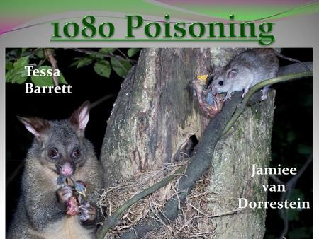 Tessa Barrett Jamiee van Dorrestein. Sodium Fluoroacetate Plant based poison Chemically manufactured Bio-degradable Used for pest control to kill: I.