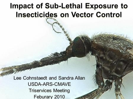 Impact of Sub-Lethal Exposure to Insecticides on Vector Control Lee Cohnstaedt and Sandra Allan USDA-ARS-CMAVE Triservices Meeting Feburary 2010 Lee Cohnstaedt.