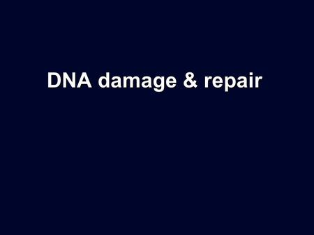 DNA damage & repair.