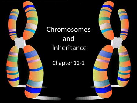 Chromosomes and Inheritance