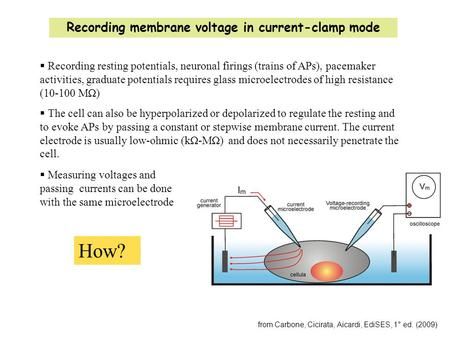 Recording membrane voltage in current-clamp mode from Carbone, Cicirata, Aicardi, EdiSES, 1° ed. (2009)  Recording resting potentials, neuronal firings.