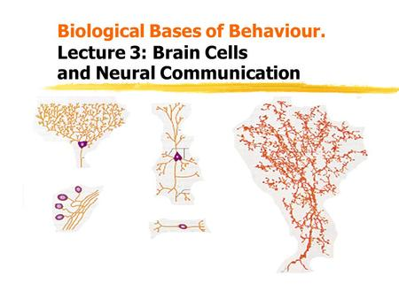 Biological Bases of Behaviour. Lecture 3: Brain Cells