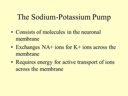 The Sodium-Potassium Pump Consists of molecules in the neuronal membrane Exchanges NA+ ions for K+ ions across the membrane Requires energy for active.