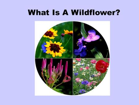 What Is A Wildflower?. Those that grow in the wild or on their own, without cultivation, are called wildflowers.
