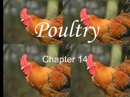 Poultry Chapter 14. Poultry Includes any domesticated bird. Chicken, turkey and duck are the most common.