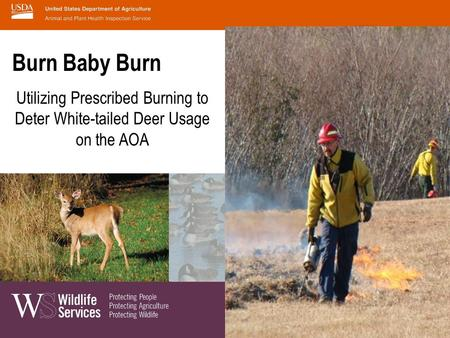 Burn Baby Burn Utilizing Prescribed Burning to Deter White-tailed Deer Usage on the AOA.