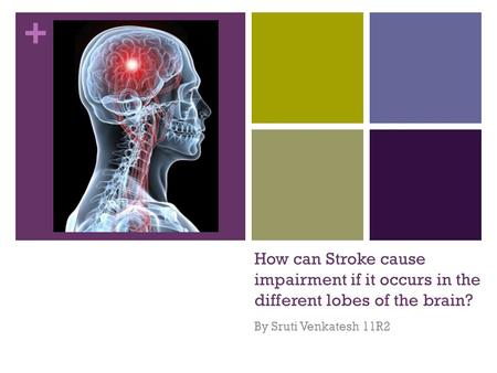 + How can Stroke cause impairment if it occurs in the different lobes of the brain? By Sruti Venkatesh 11R2.
