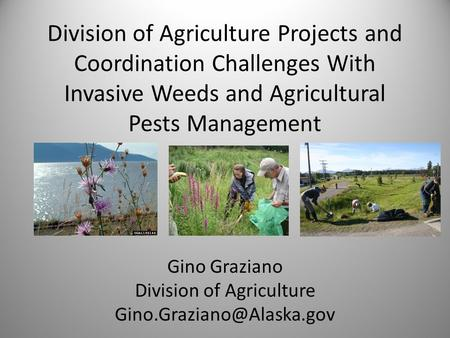 Division of Agriculture Projects and Coordination Challenges With Invasive Weeds and Agricultural Pests Management Gino Graziano Division of Agriculture.