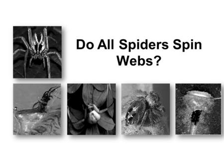 Do All Spiders Spin Webs?. 7Which sentence explains why crab spiders live on flowers? Ο A. Crab spiders wait for insects to come to the flowers. Ο B.