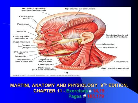 THE AXIAL MUSCLES MARTINI, ANATOMY AND PHYSIOLOGY 9TH EDITION, CHAPTER 11 - Exercises # 14,15 Pages # 165,179.