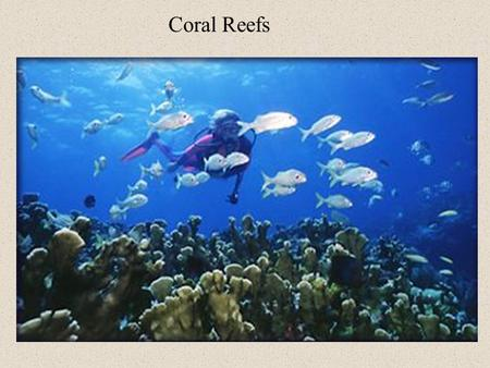 Coral Reefs. Coral reefs consist of many diverse species of corals. These corals in turn are made up of tiny organisms called polyps.