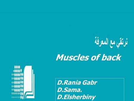 Muscles of back D.Rania Gabr D.Sama. D.Elsherbiny.