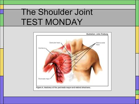 The Shoulder Joint TEST MONDAY. Anterior Shoulder Muscles Coracobrachialis Pectoralis Major Subscapularis Biceps Brachii.