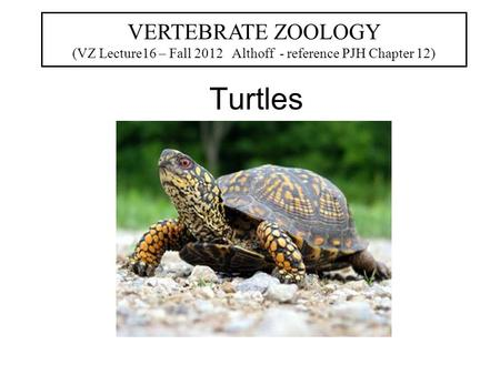 Turtles VERTEBRATE ZOOLOGY (VZ Lecture16 – Fall 2012 Althoff - reference PJH Chapter 12)