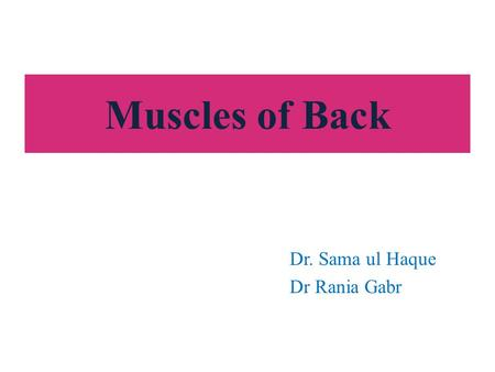 Muscles of Back Dr. Sama ul Haque Dr Rania Gabr. Objectives Identify the superficial and deep muscles of the back in terms of their location, nerve supply.
