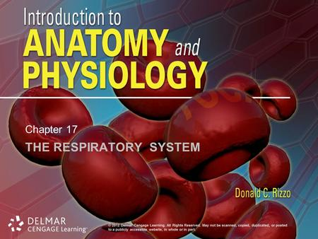 THE RESPIRATORY SYSTEM Chapter 17. Introduction Organs: nose, pharynx, larynx, trachea, bronchi, lungs Respiration: exchange of O 2 / CO 2 between atmosphere,