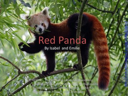Red Panda By Isabel and Emilie NOTICE: The following presentation contains copyrighted materials used under the Multimedia Guidelines and Fair use exemptions.