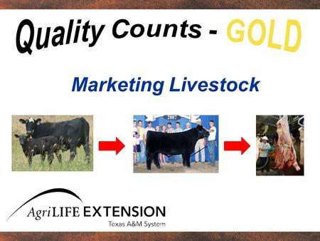 Marketing Livestock. One purpose of Quality Counts Reveal impact of 76,000 market projects.