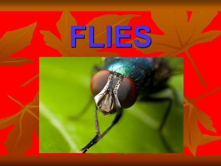 FLIES. WHAT ARE FLIES? True flies are insects of the order Diptera,possessing a single pair of wings on the mesothorax and a pair of halteres, derived.