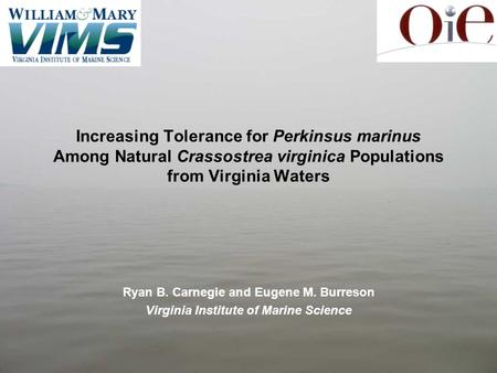 Increasing Tolerance for Perkinsus marinus Among Natural Crassostrea virginica Populations from Virginia Waters Ryan B. Carnegie and Eugene M. Burreson.