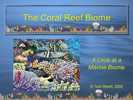 A Look at a Marine Biome © Terri Street, 2002