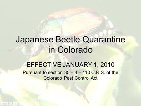 Japanese Beetle Quarantine in Colorado EFFECTIVE JANUARY 1, 2010 Pursuant to section 35 – 4 – 110 C.R.S. of the Colorado Pest Control Act.