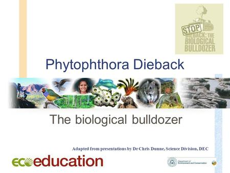 Phytophthora Dieback The biological bulldozer Adapted from presentations by Dr Chris Dunne, Science Division, DEC.
