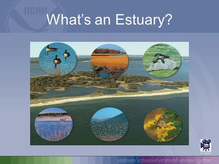 What's an Estuary?.