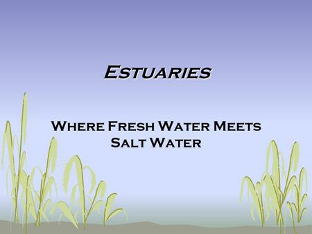 Where Fresh Water Meets Salt Water