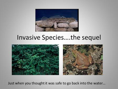 Invasive Species….the sequel Just when you thought it was safe to go back into the water…