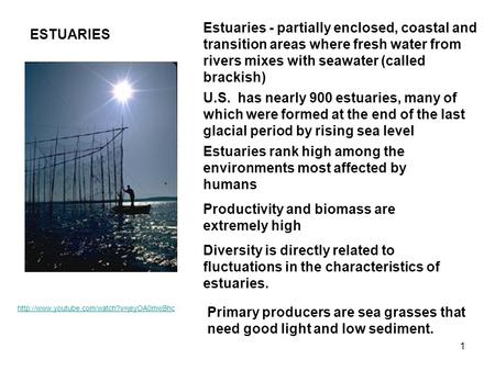 Estuaries rank high among the environments most affected by humans