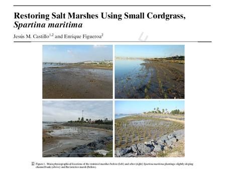 Introduction Soft engineering projects are needed to restore, rehabilitate, or recreate degraded salt marshes, with cordgrasses (genus Spartina) being.