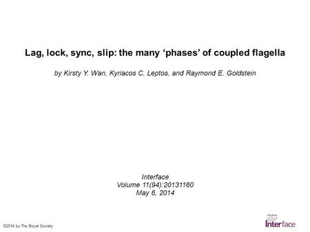 Lag, lock, sync, slip: the many 'phases' of coupled flagella by Kirsty Y. Wan, Kyriacos C. Leptos, and Raymond E. Goldstein Interface Volume 11(94):20131160.