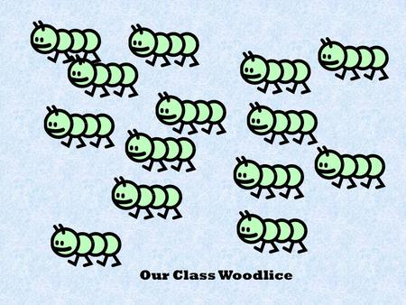 Our Class Woodlice Water puddle Wet, damp wood Dry Wood Cold stones.