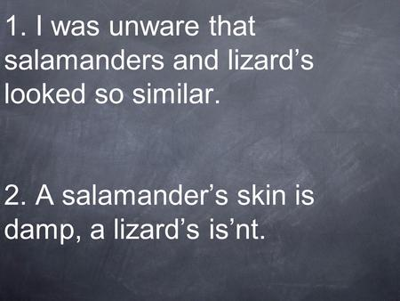 1. I was unware that salamanders and lizard's looked so similar. 2. A salamander's skin is damp, a lizard's is'nt.