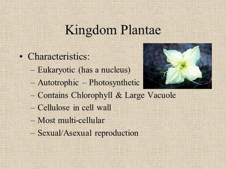 Kingdom Plantae Characteristics: –Eukaryotic (has a nucleus) –Autotrophic – Photosynthetic –Contains Chlorophyll & Large Vacuole –Cellulose in cell wall.