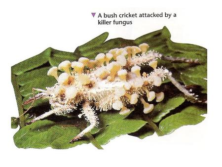 Unnoticed,a speck of dust lands on a cricket's back