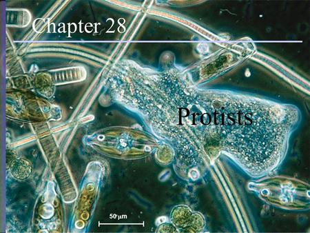 Protists Chapter 28 50  m Chapter 28 Protists. Introduction Eukaryotic Mostly unicellular (many colonial and multicellular forms) Exhibit more structural.