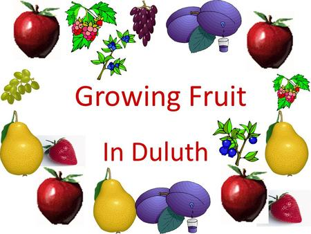 Growing Fruit In Duluth. Planning the planting Size of fruit planting – Space available – Size of family – Experience of grower – Availability of tools.