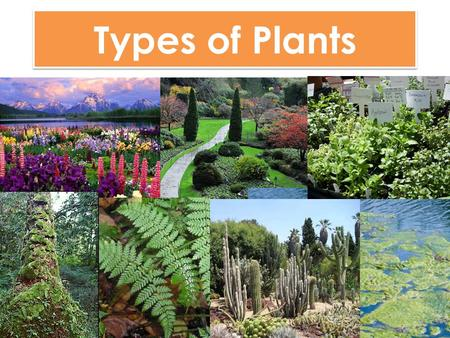Types of Plants.